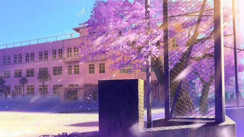 樱花树下的街道