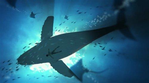 鲸与海 2k 60FPS